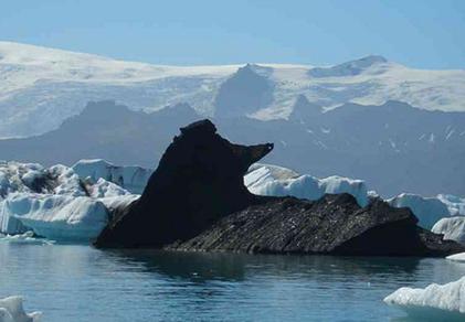 the algore black love poodle iceberg_thumb[23]
